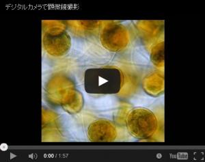 顕微鏡撮影画像